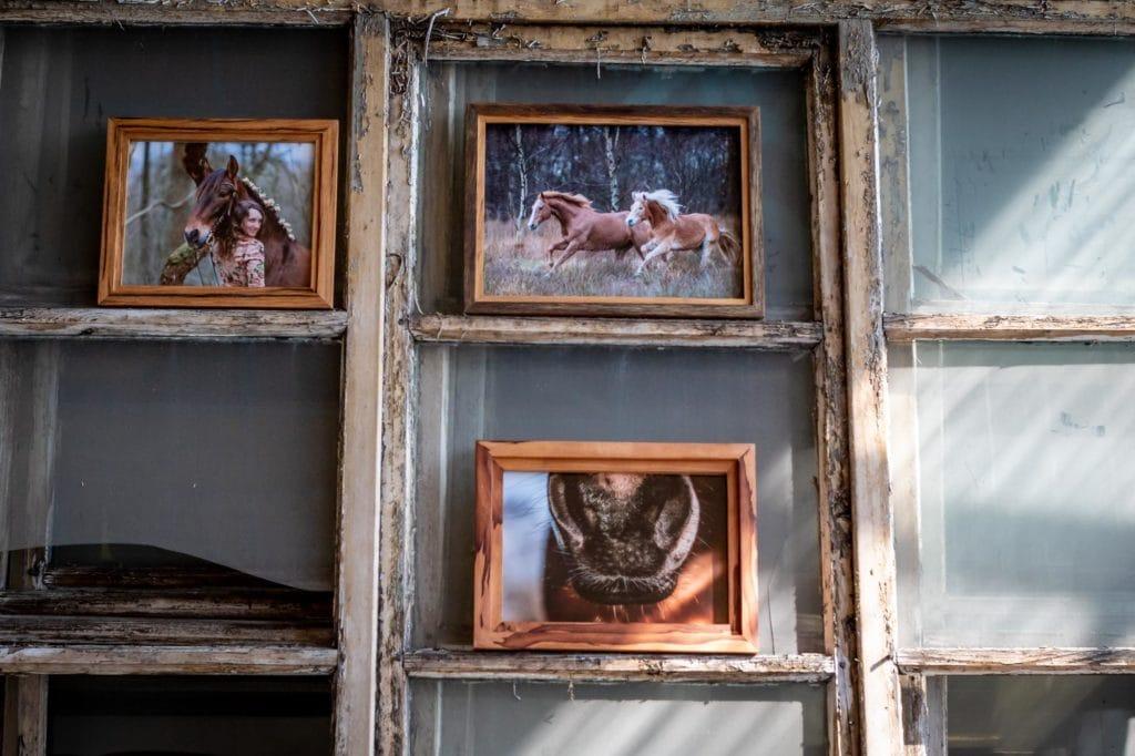 Tierfotos in handgefertigten Rahmen