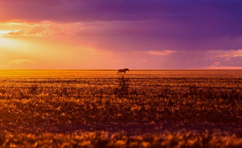 Pferd im Sonnenuntergang in der Wüste