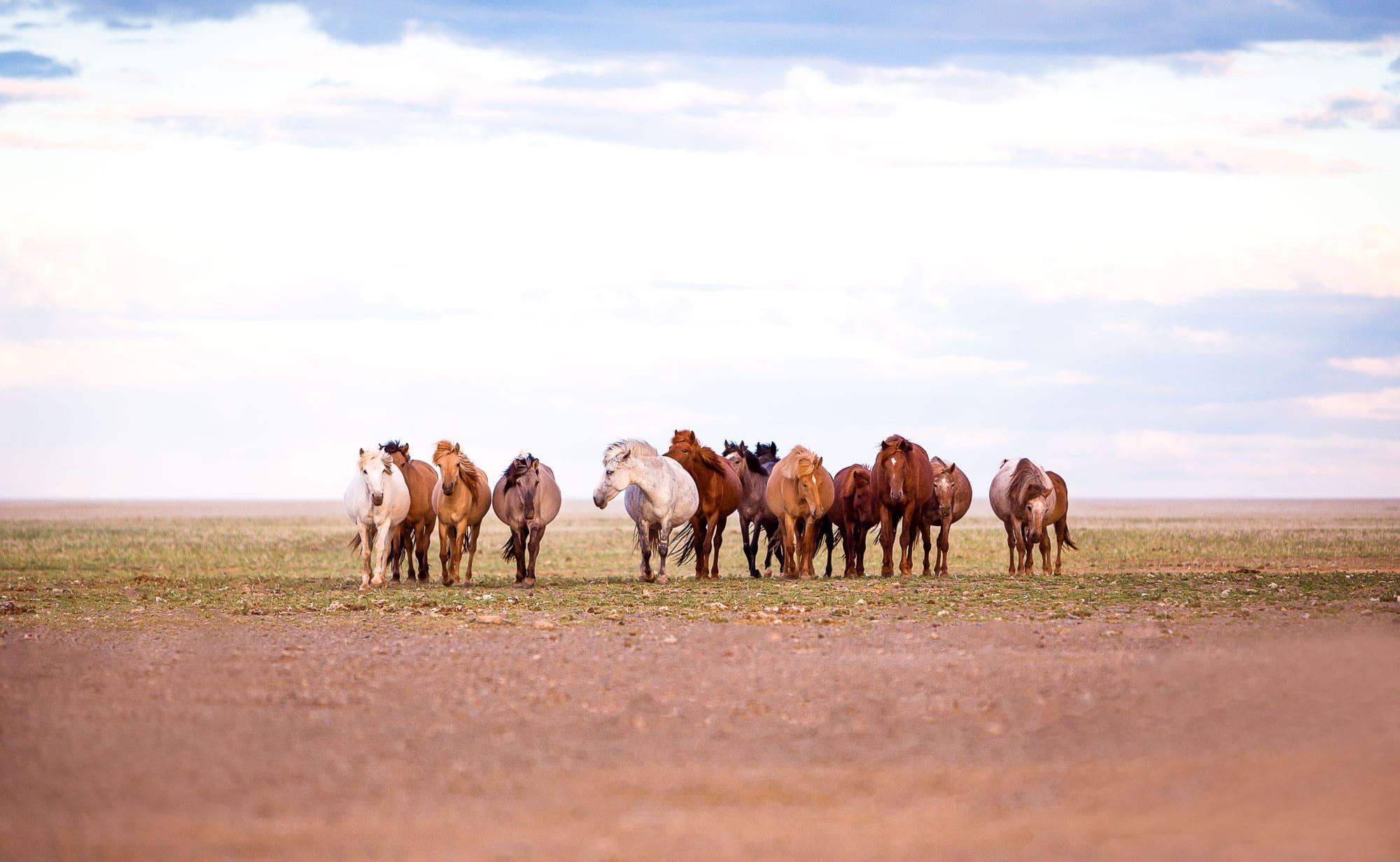 Pferdefotografie Wueste Gobi Mongolei