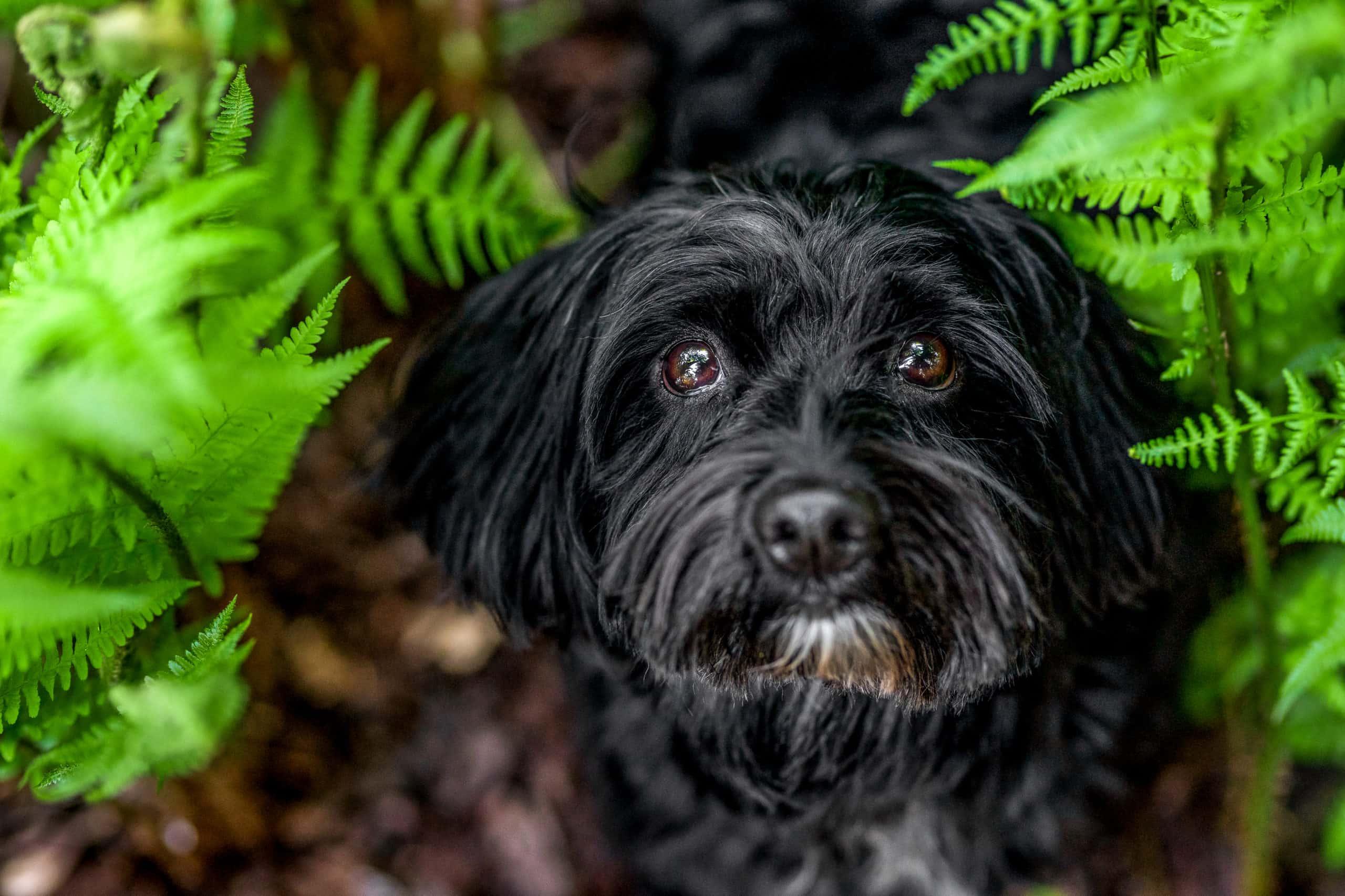 Schwarzer Hund vor gruenem Hintergrund