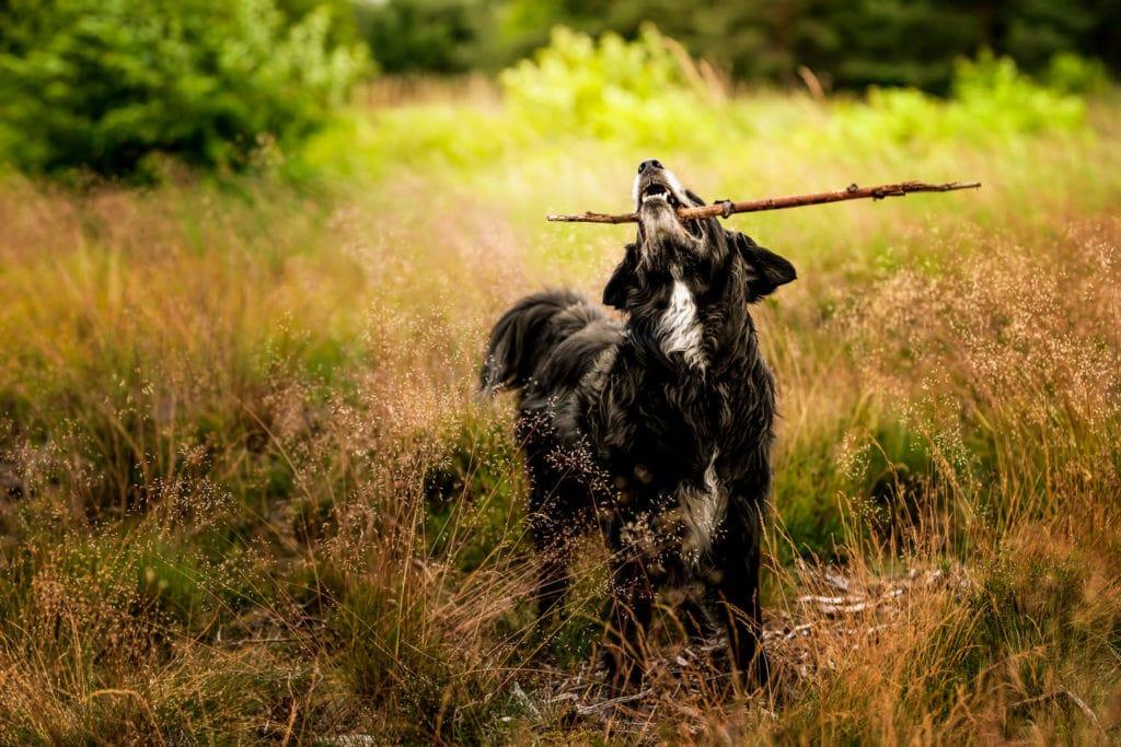 Hundefoto auf Wiese in Bremen mit schwarzem Hund Hundefotografie Bremen