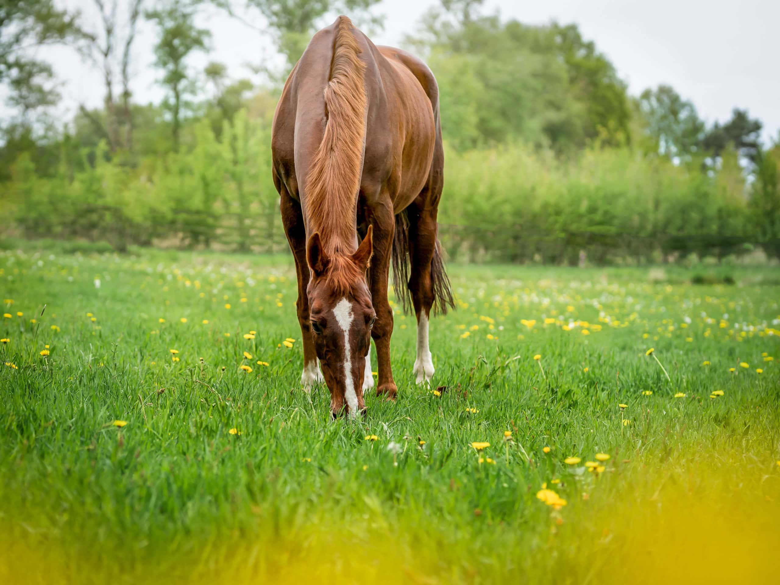 Pferdefotoshooting Bremen Niedersachsen